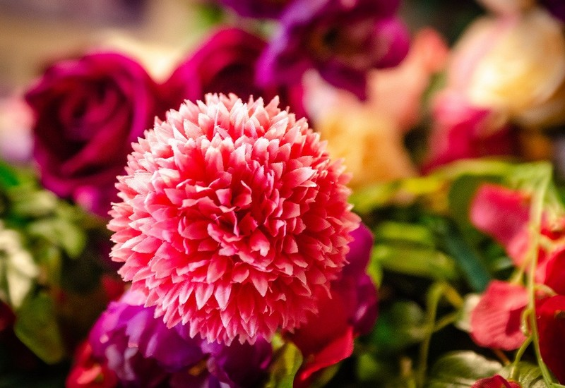 シングルマザーの恋の花